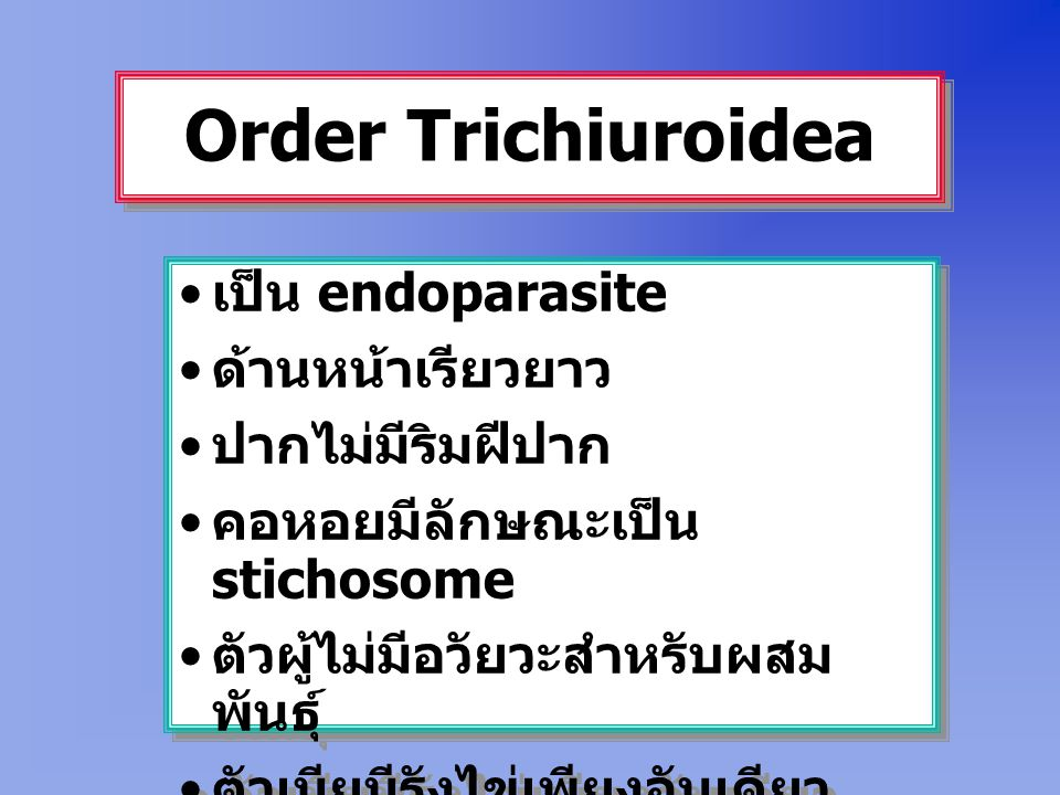 Order Trichiuroidea เป็น endoparasite ด้านหน้าเรียวยาว