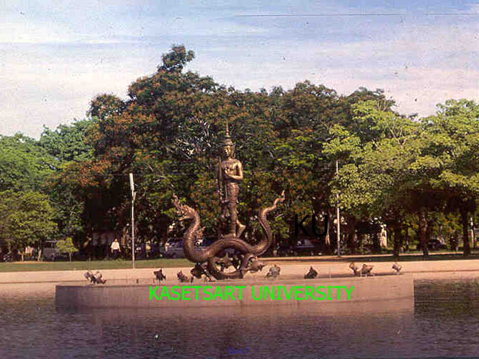 KU KASETSART UNIVERSITY
