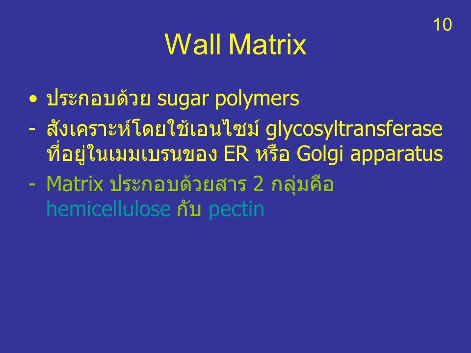 Wall Matrix ประกอบด้วย sugar polymers