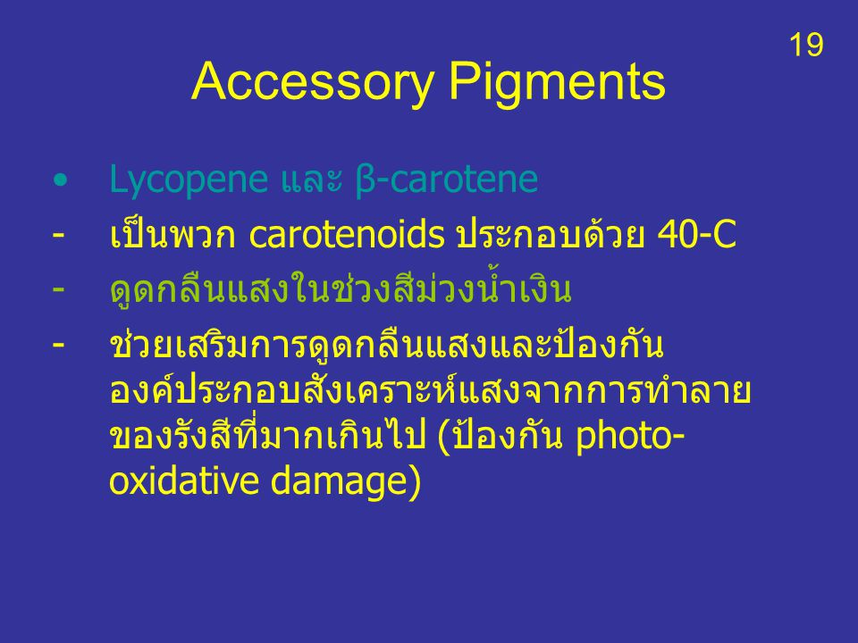 Accessory Pigments Lycopene และ β-carotene