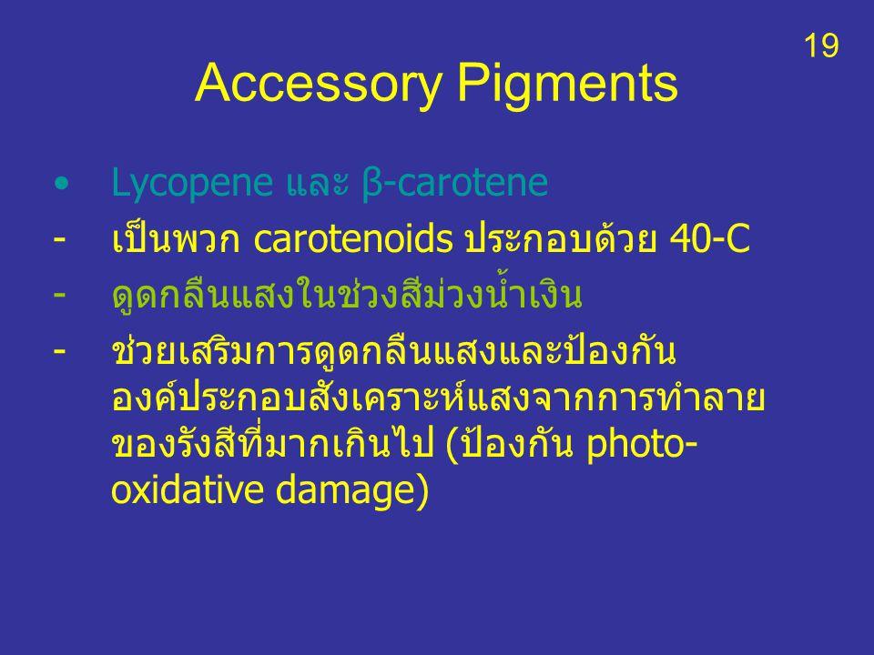 Accessory Pigments Lycopene และ β-carotene