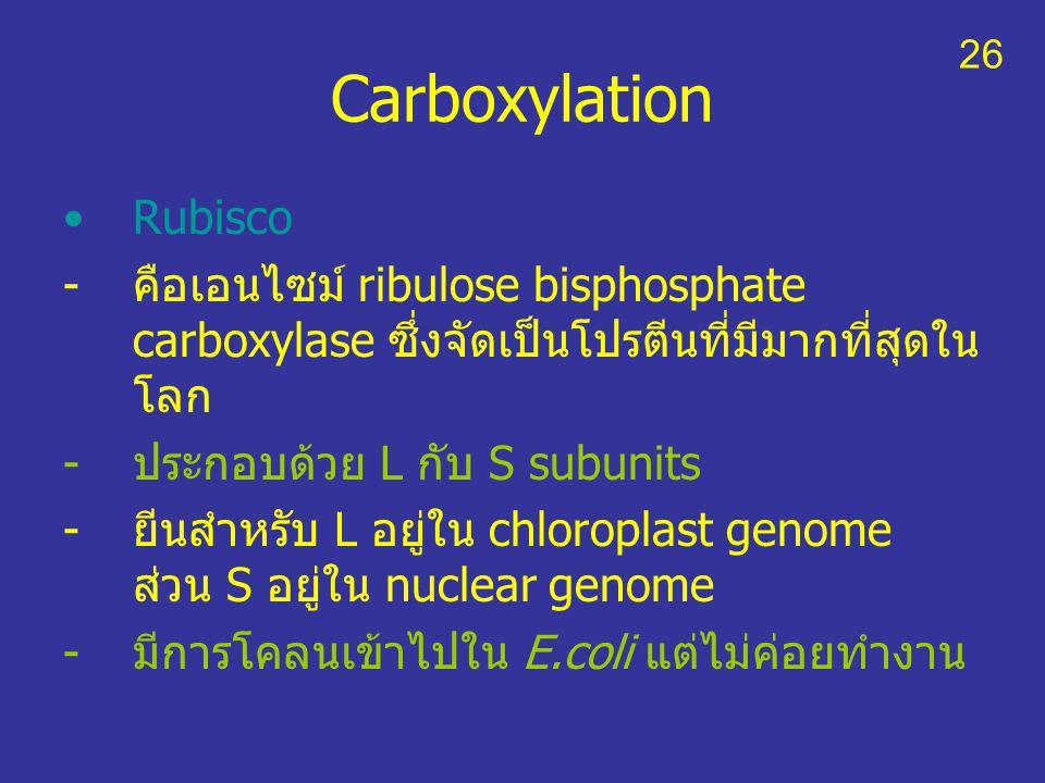 Carboxylation Rubisco