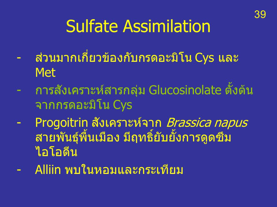 Sulfate Assimilation ส่วนมากเกี่ยวข้องกับกรดอะมิโน Cys และ Met