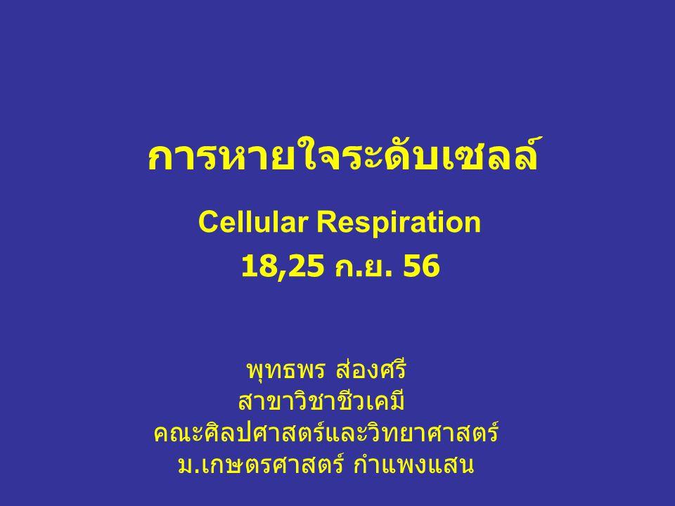 Cellular Respiration 18,25 ก.ย. 56