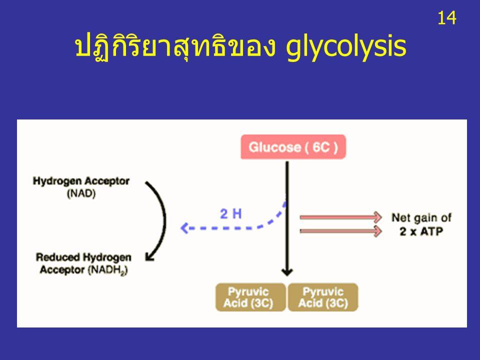 ปฏิกิริยาสุทธิของ glycolysis