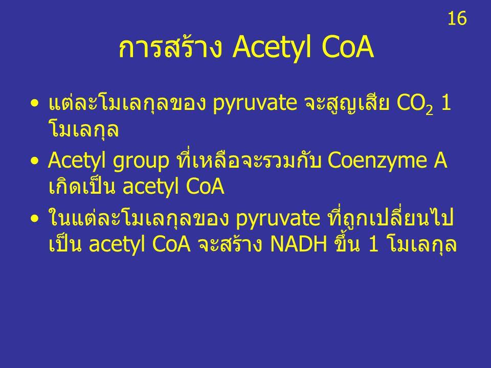 การสร้าง Acetyl CoA แต่ละโมเลกุลของ pyruvate จะสูญเสีย CO2 1 โมเลกุล