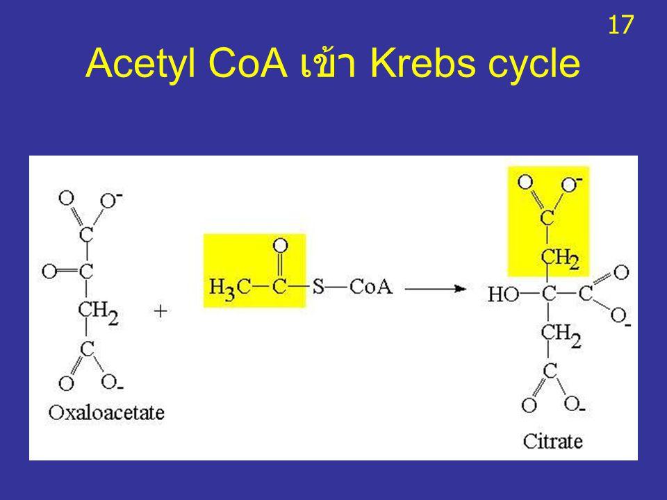 Acetyl CoA เข้า Krebs cycle