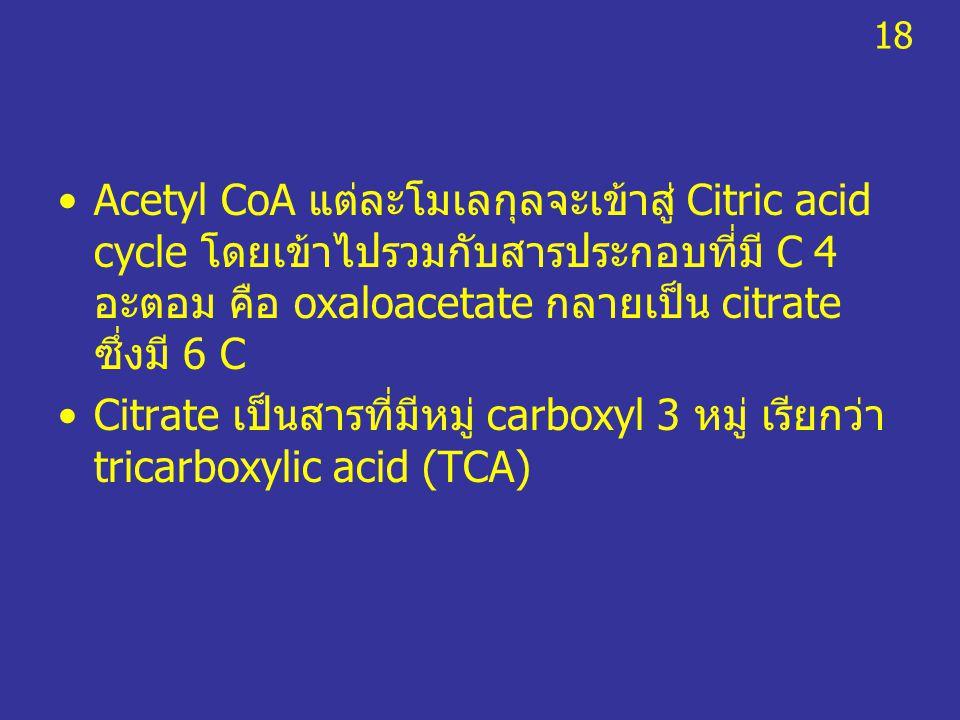 18 Acetyl CoA แต่ละโมเลกุลจะเข้าสู่ Citric acid cycle โดยเข้าไปรวมกับสารประกอบที่มี C 4 อะตอม คือ oxaloacetate กลายเป็น citrate ซึ่งมี 6 C.