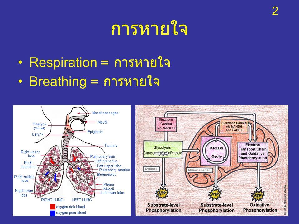 2 การหายใจ Respiration = การหายใจ Breathing = การหายใจ