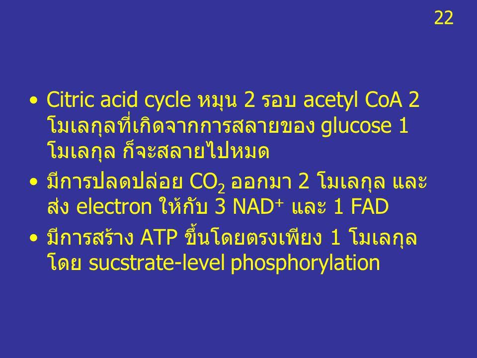 22 Citric acid cycle หมุน 2 รอบ acetyl CoA 2 โมเลกุลที่เกิดจากการสลายของ glucose 1 โมเลกุล ก็จะสลายไปหมด.