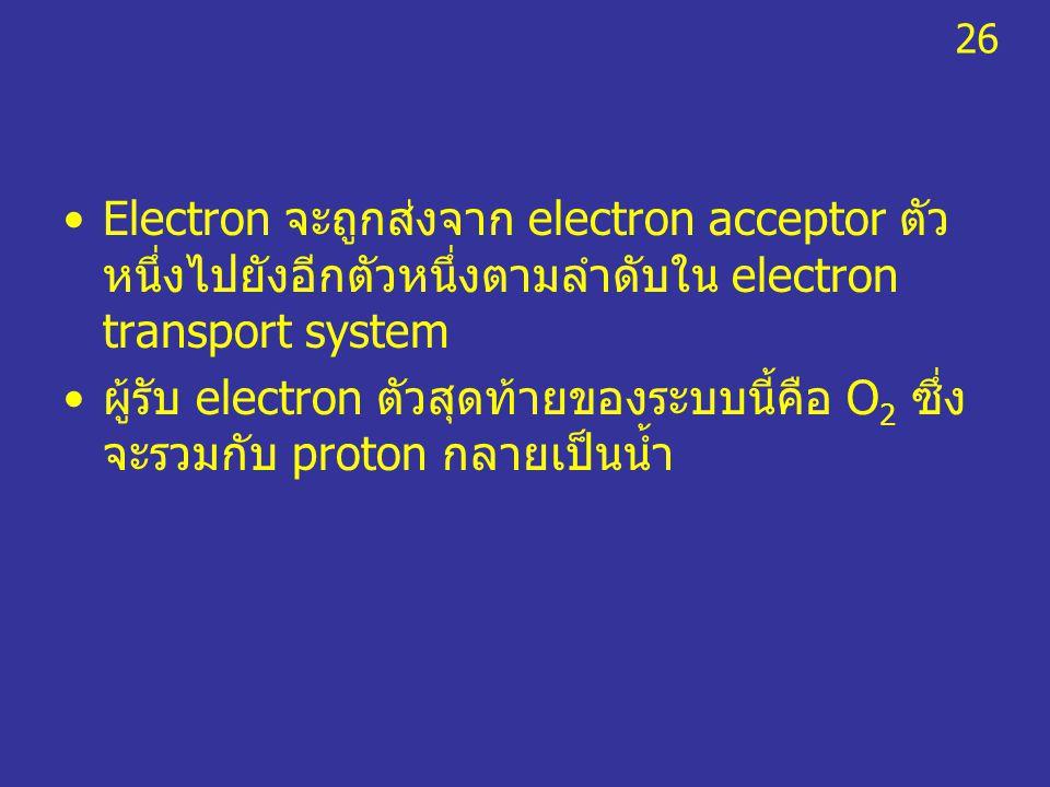26 Electron จะถูกส่งจาก electron acceptor ตัวหนึ่งไปยังอีกตัวหนึ่งตามลำดับใน electron transport system.