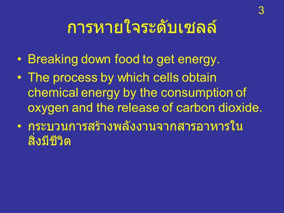 การหายใจระดับเซลล์ Breaking down food to get energy.