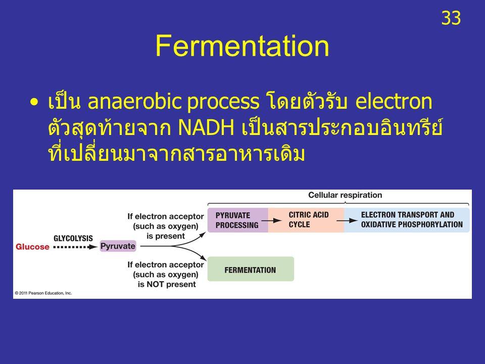 33 Fermentation.