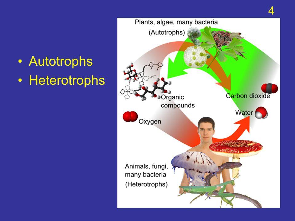 4 Autotrophs Heterotrophs