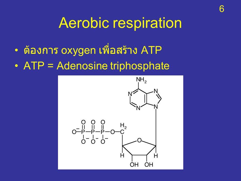 Aerobic respiration ต้องการ oxygen เพื่อสร้าง ATP