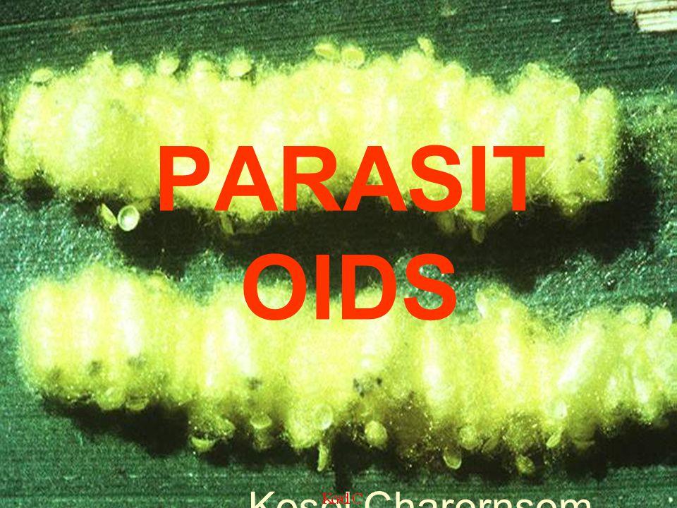 PARASITOIDS Kosol Charernsom