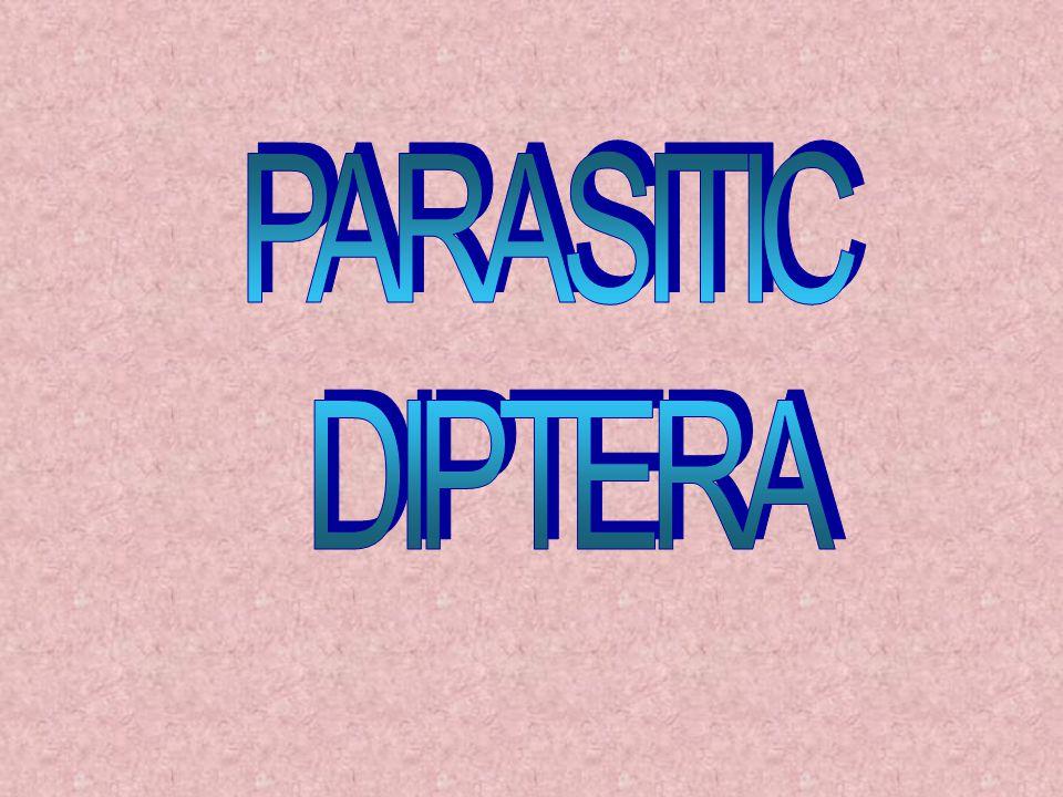 PARASITIC DIPTERA