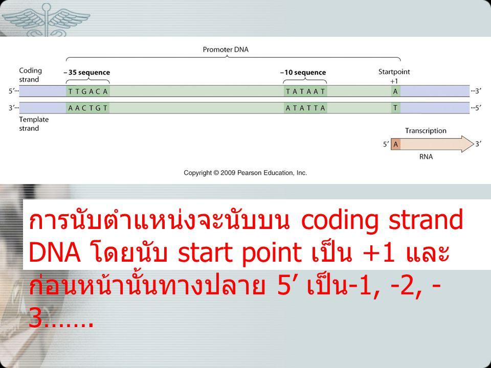 การนับตำแหน่งจะนับบน coding strand DNA โดยนับ start point เป็น +1 และก่อนหน้านั้นทางปลาย 5' เป็น-1, -2, -3…….