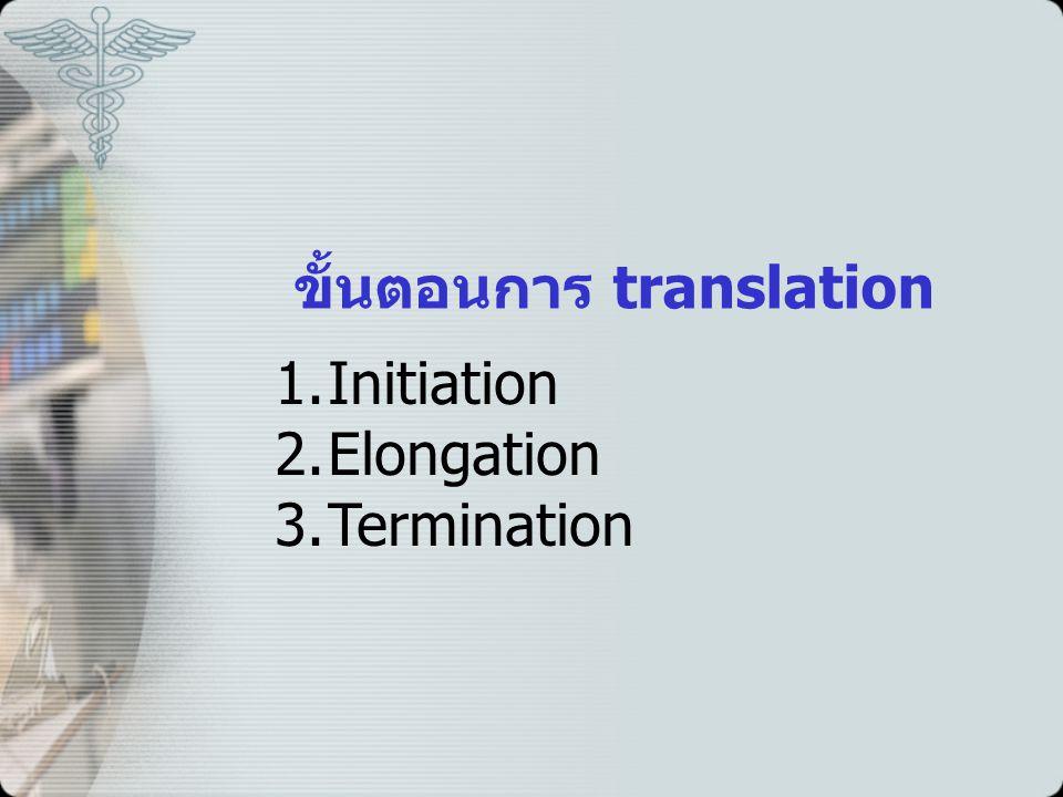 ขั้นตอนการ translation