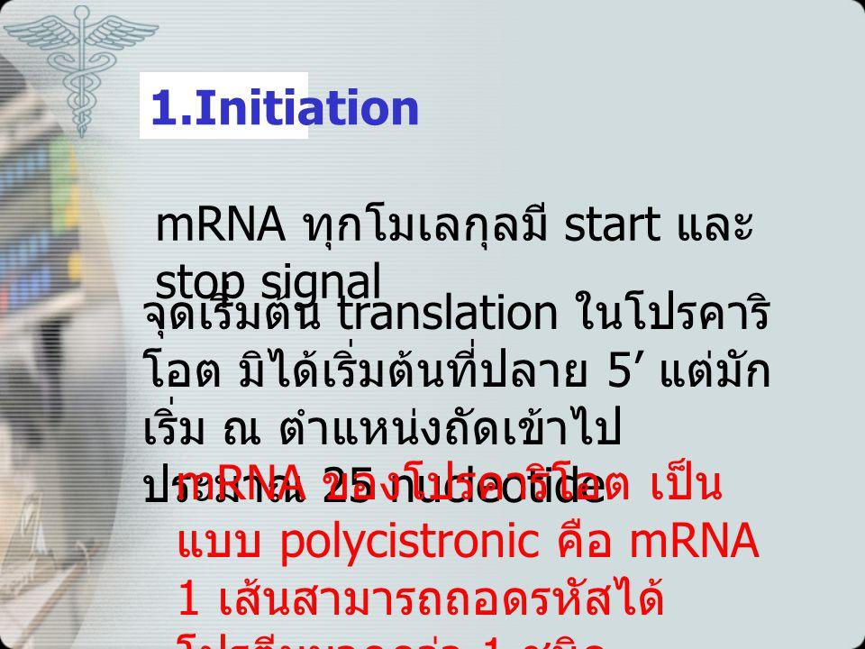 1.Initiation mRNA ทุกโมเลกุลมี start และ stop signal.