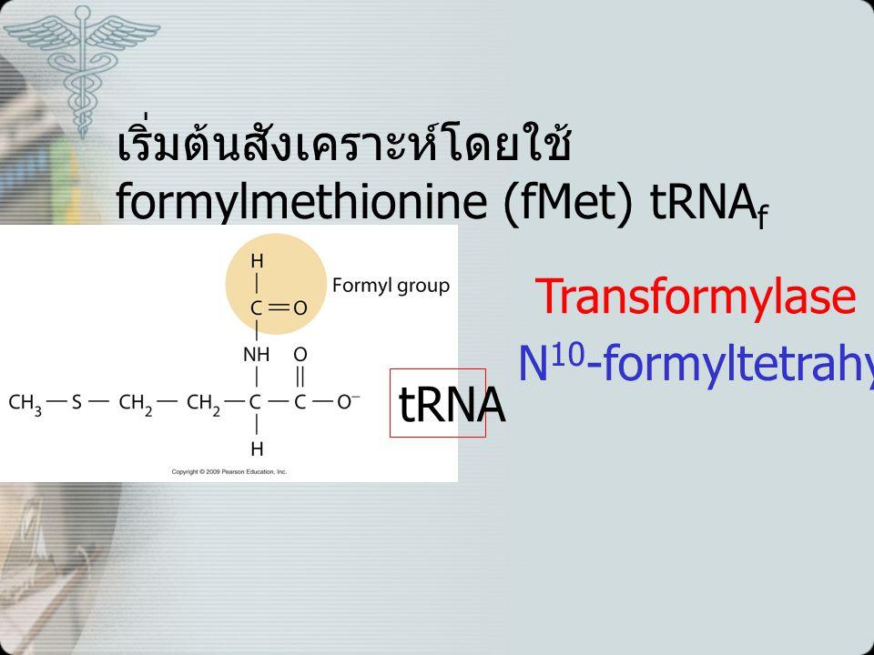 เริ่มต้นสังเคราะห์โดยใช้ formylmethionine (fMet) tRNAf