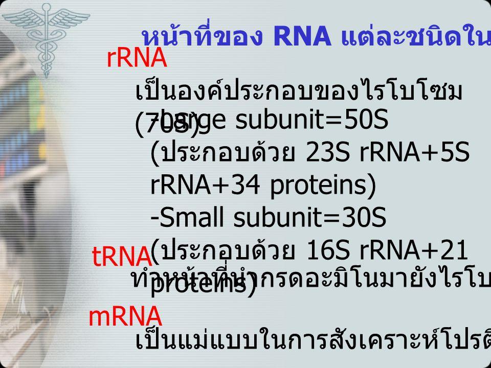 หน้าที่ของ RNA แต่ละชนิดในโปรคาริโอต