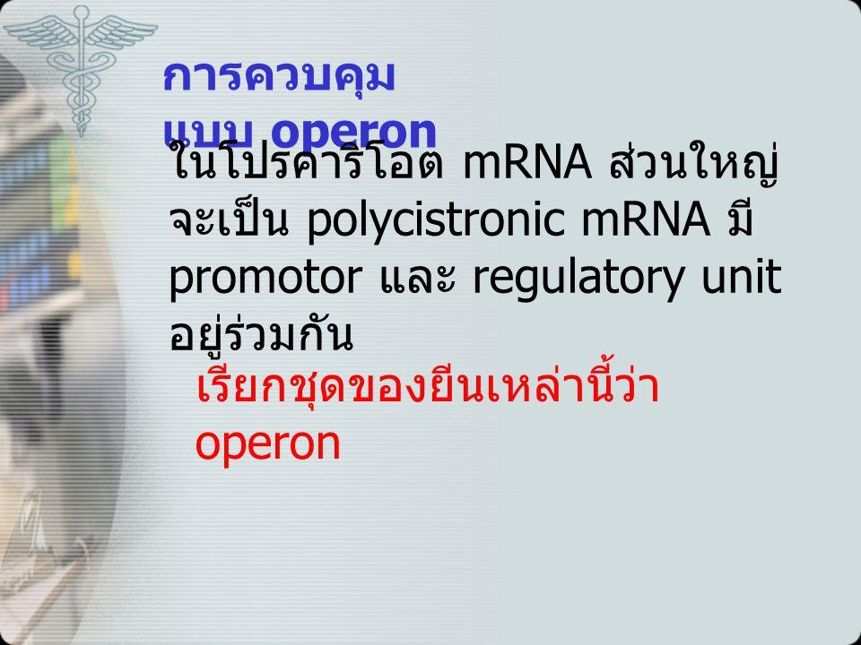 การควบคุมแบบ operon ในโปรคาริโอต mRNA ส่วนใหญ่จะเป็น polycistronic mRNA มี promotor และ regulatory unit อยู่ร่วมกัน.