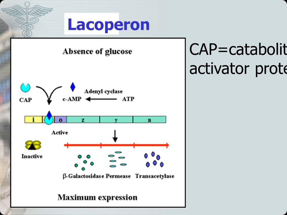 Lacoperon CAP=catabolite gene activator protein
