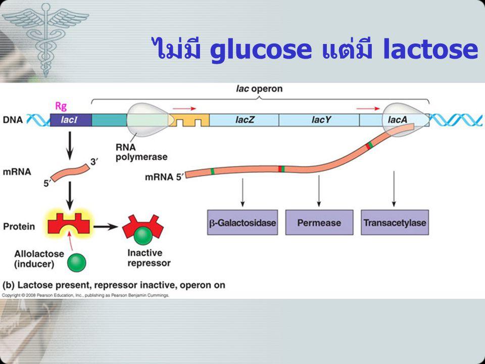 ไม่มี glucose แต่มี lactose