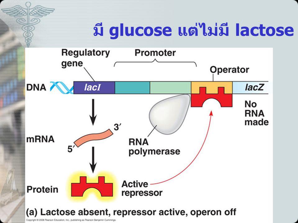 มี glucose แต่ไม่มี lactose