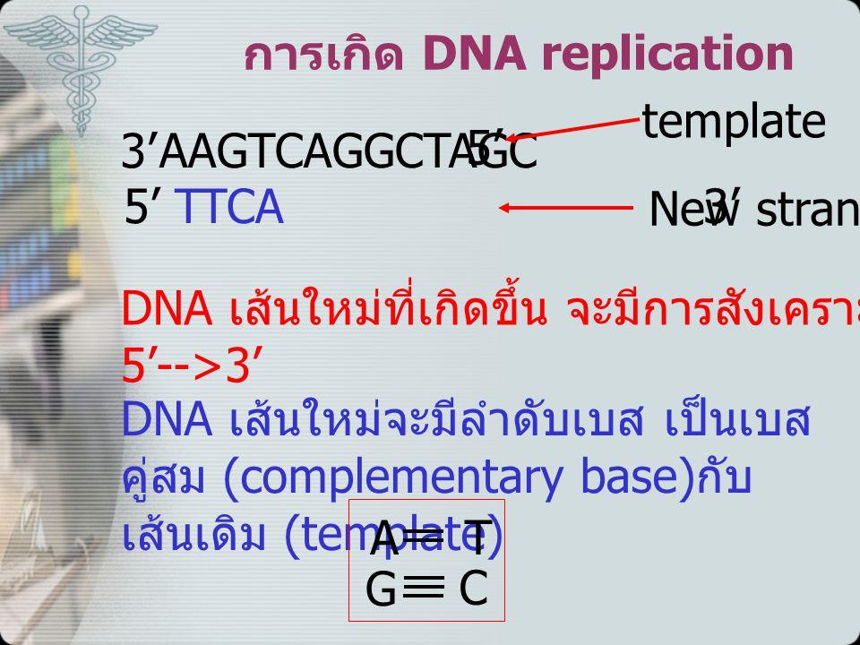 การเกิด DNA replication