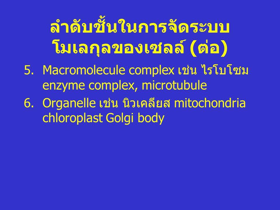 ลำดับชั้นในการจัดระบบโมเลกุลของเซลล์ (ต่อ)