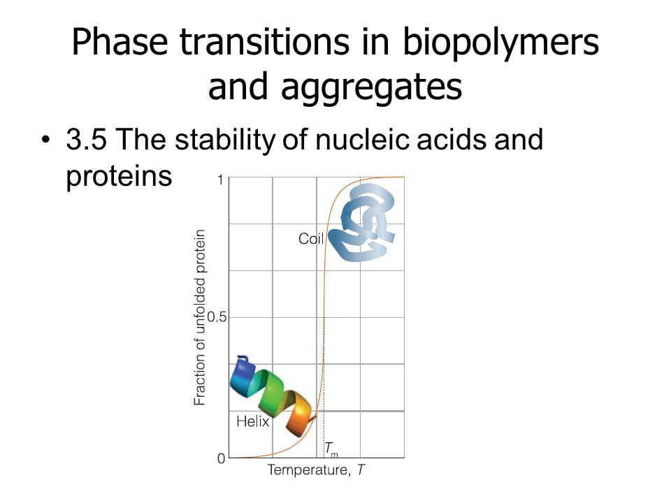 Phase transitions in biopolymers and aggregates