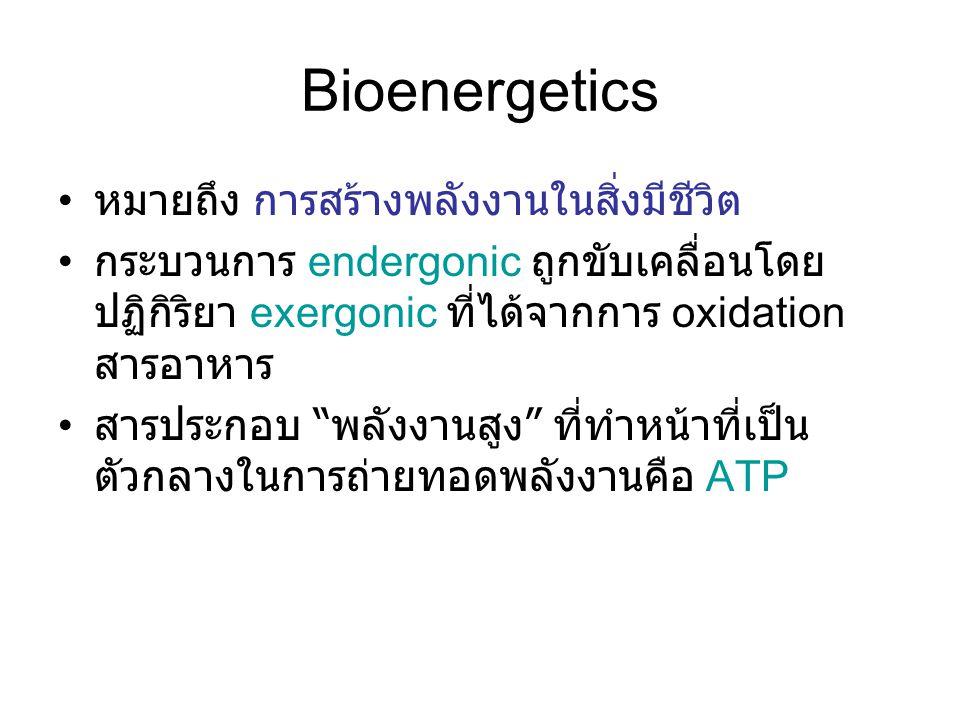 Bioenergetics หมายถึง การสร้างพลังงานในสิ่งมีชีวิต