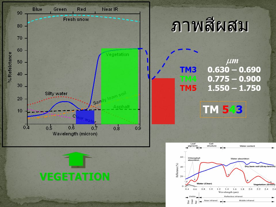 ภาพสีผสม TM 543 VEGETATION VEGETATION m TM3 0.630 – 0.690