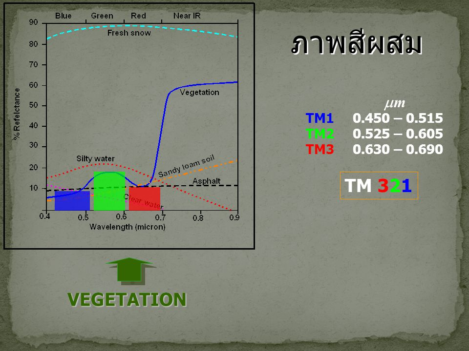 ภาพสีผสม TM 321 VEGETATION VEGETATION m TM1 0.450 – 0.515