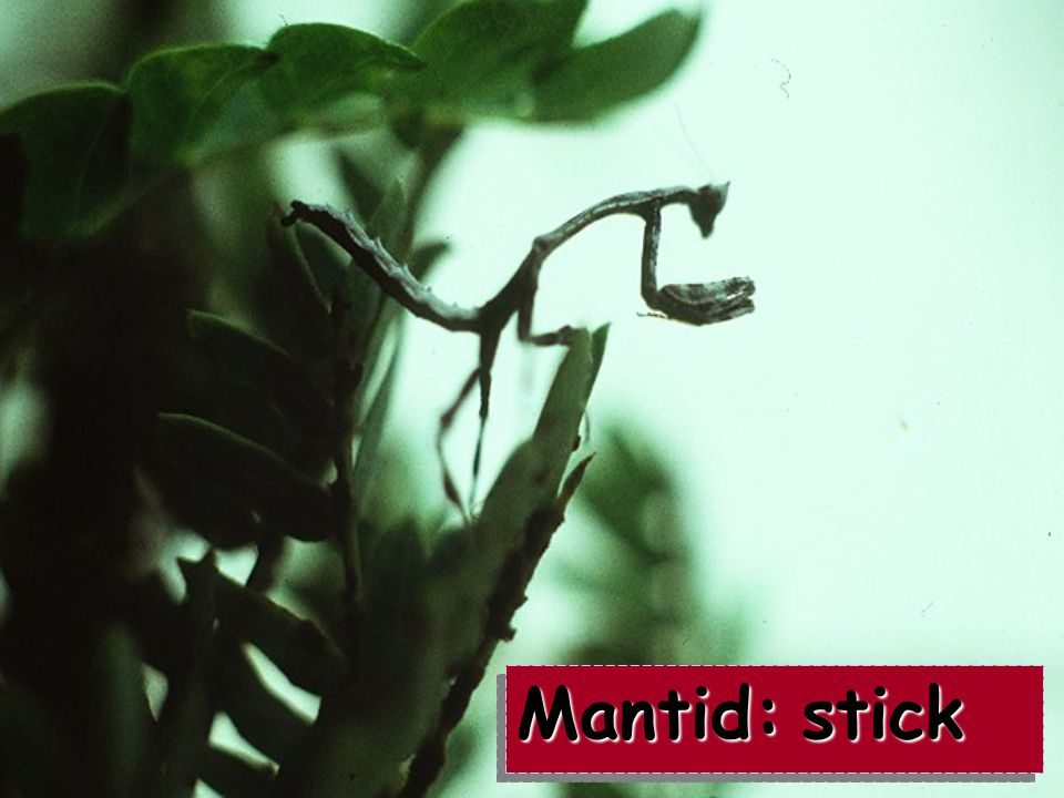Mantid: stick
