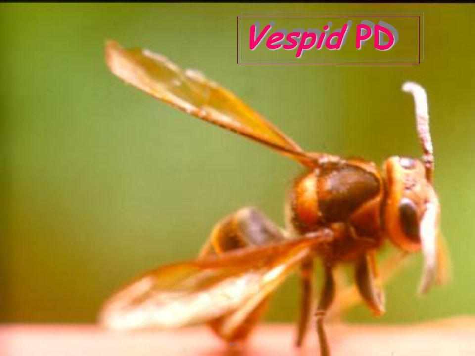 Vespid PD
