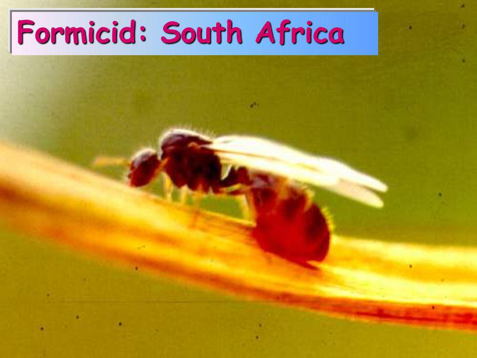 Formicid: South Africa