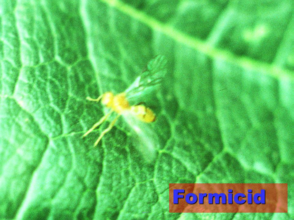 Formicid