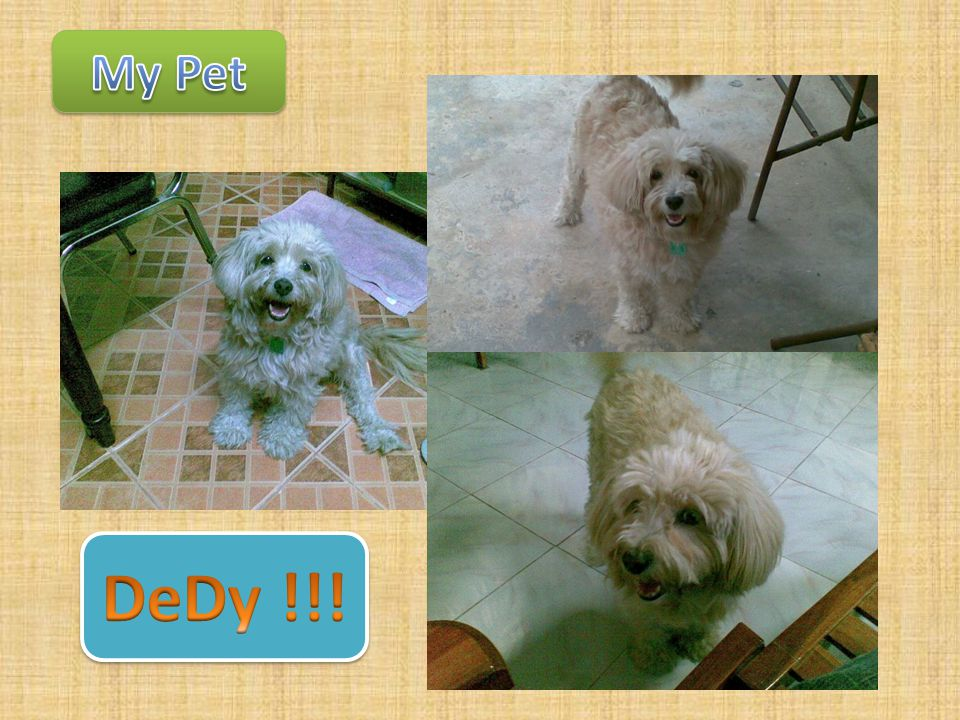 My Pet DeDy !!!