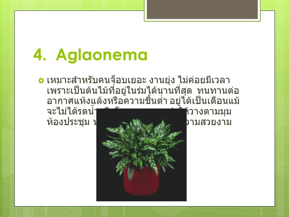 4. Aglaonema
