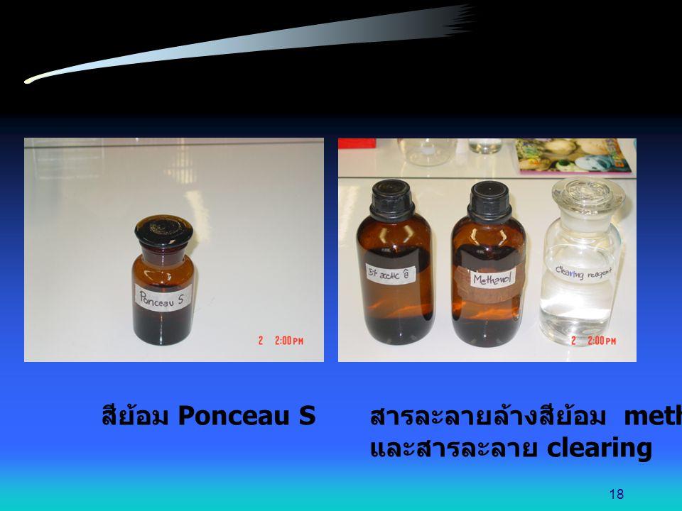สีย้อม Ponceau S สารละลายล้างสีย้อม methanol และสารละลาย clearing