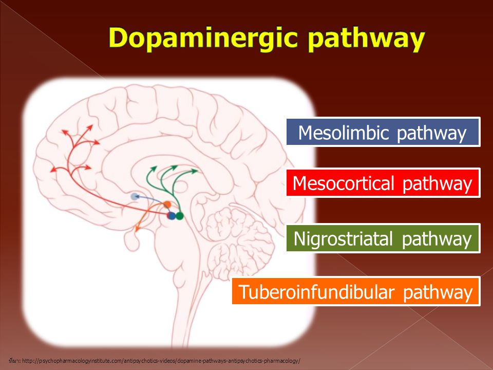 Dopaminergic pathway Mesolimbic pathway Mesocortical pathway