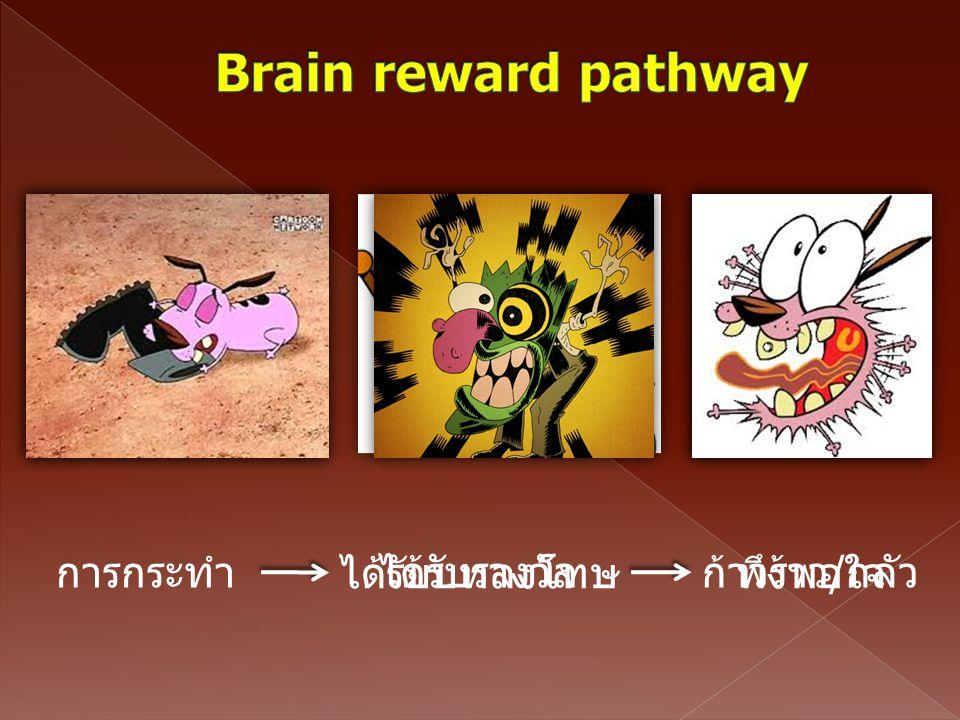 Brain reward pathway การกระทำ ได้รับบทลงโทษ ได้รับรางวัล ก้าวร้าว/กลัว
