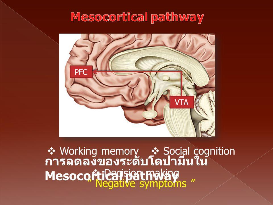 การลดลงของระดับโดปามีนใน Mesocortical pathway