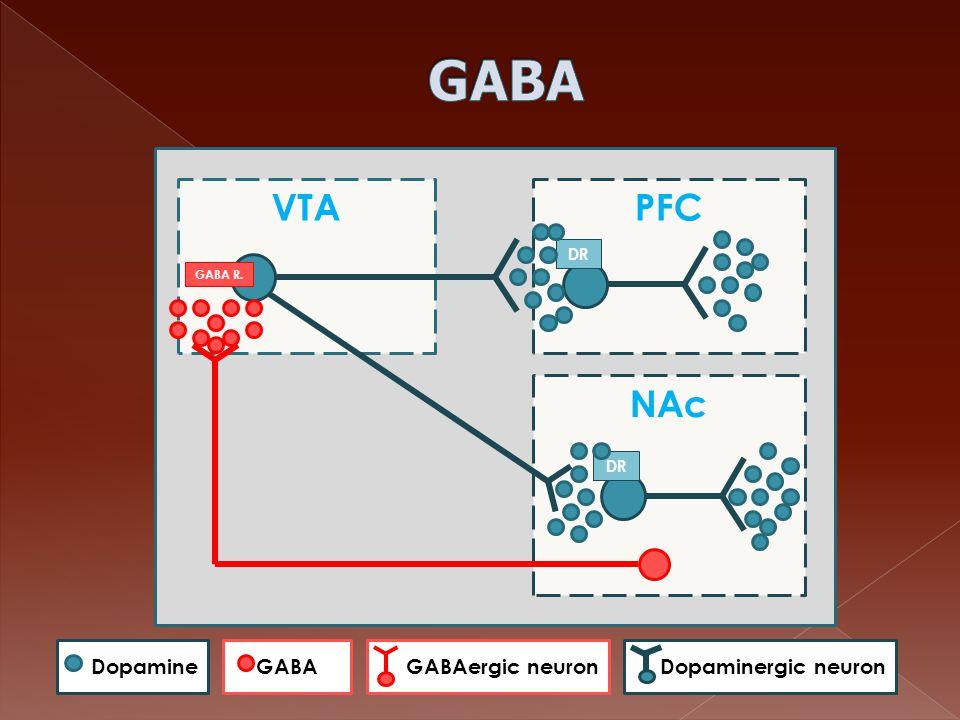 GABA VTA PFC NAc Dopamine GABA GABAergic neuron Dopaminergic neuron DR