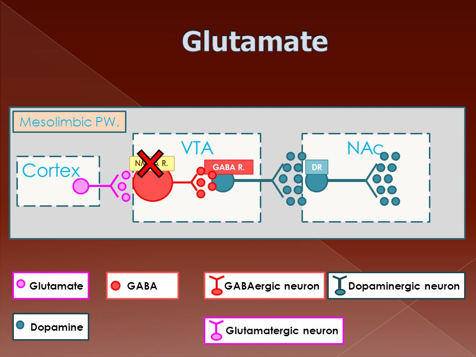 Glutamate Cortex VTA NAc Mesolimbic PW. Glutamate GABA