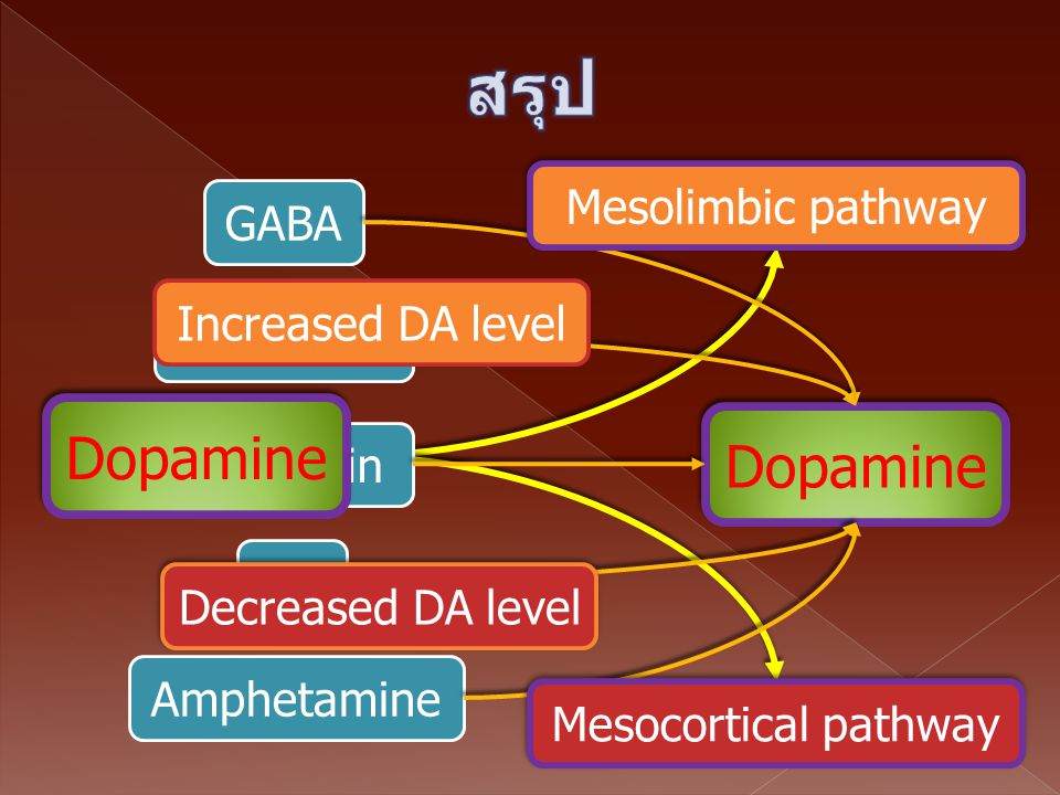 สรุป Dopamine Dopamine Mesolimbic pathway GABA Increased DA level
