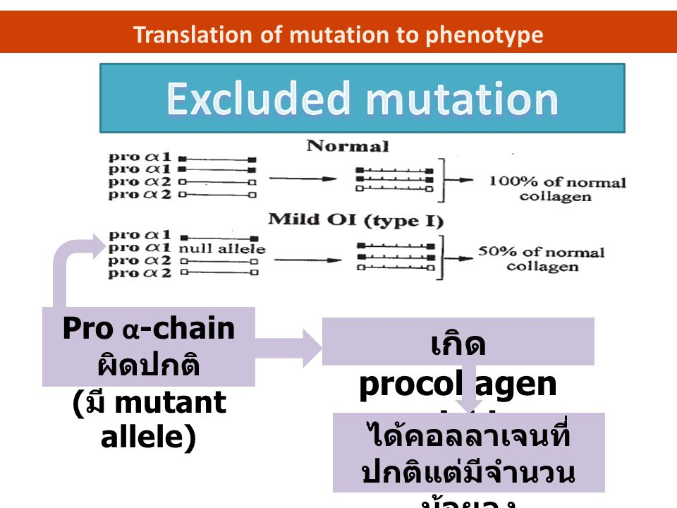 Translation of mutation to phenotype